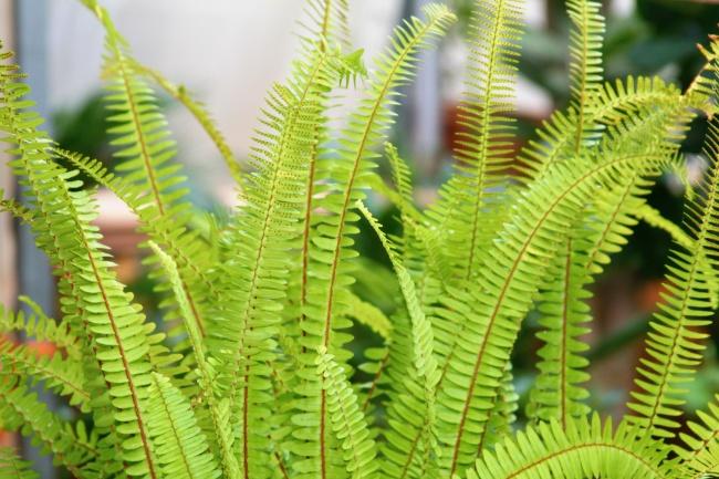 绿色植物壁纸图片下载