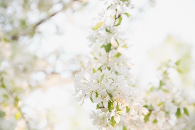 白色小清新花朵高清图片