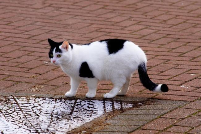 漂亮黑白小猫图片