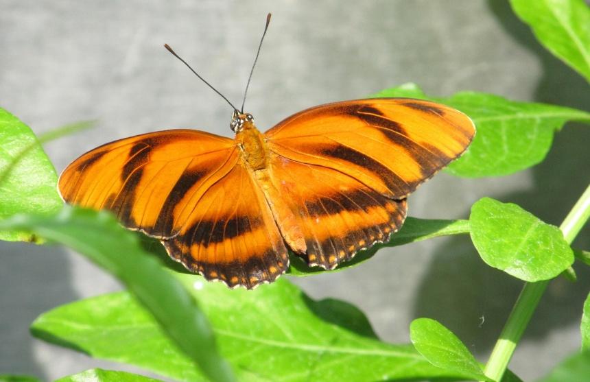 多彩蝴蝶图片大全