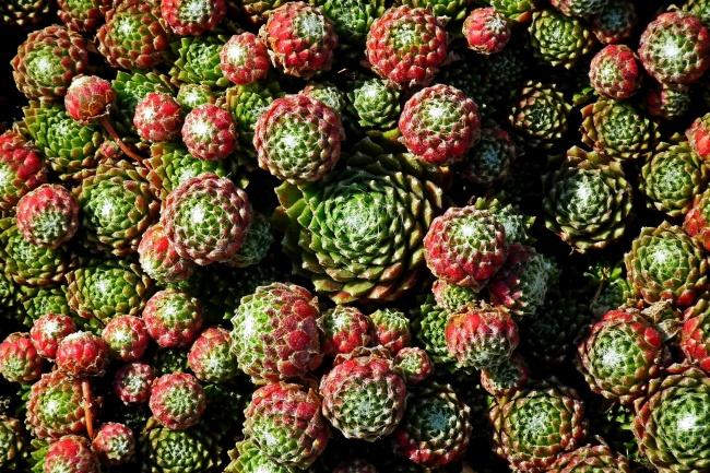 肉质植物背景图片素材