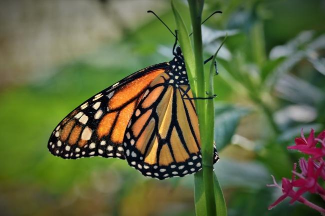 热带花蝴蝶图片下载