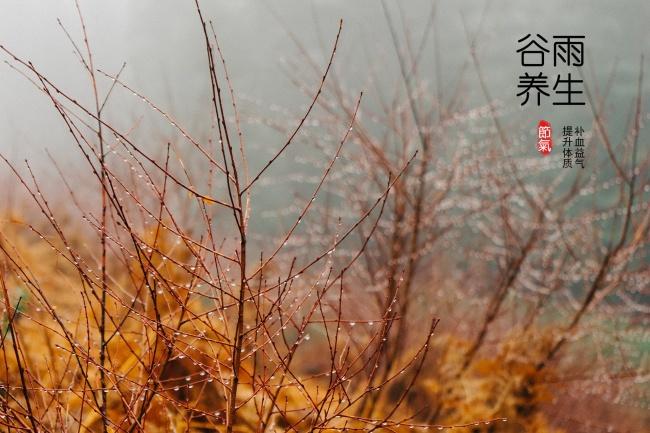 谷雨节气养生图片素材
