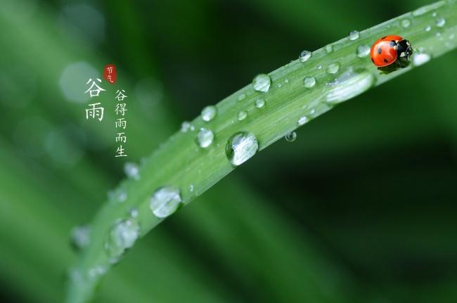 谷雨素材高清图