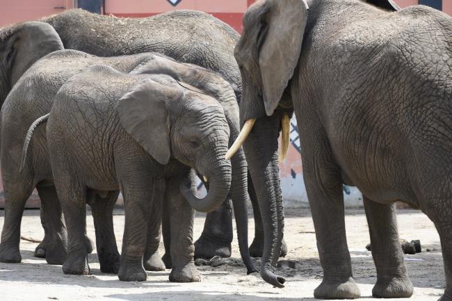 非洲野生象群高清图