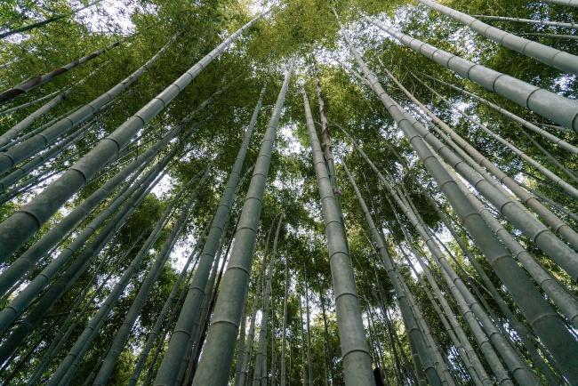 绿色竹林高清图片下载