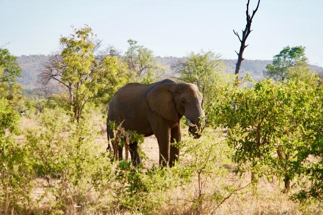 大象在森林高清圖片