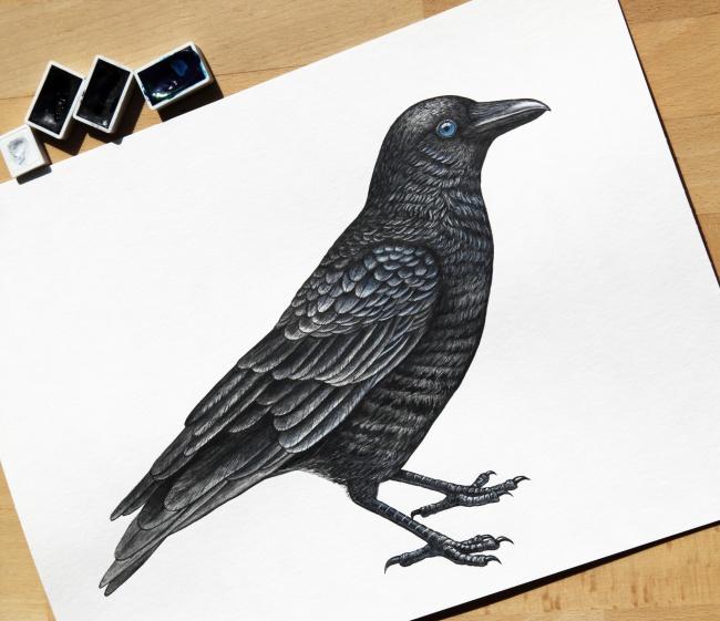 手绘鸟高清图片