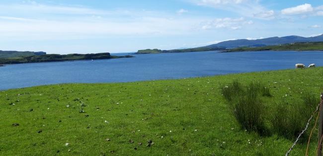水边绿色草原精美图片