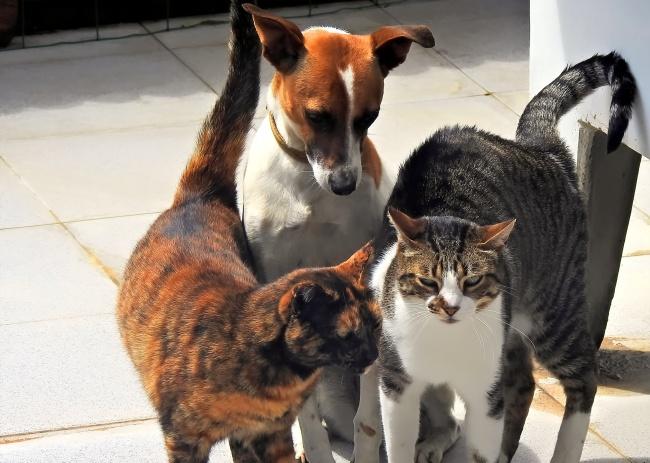 家养小猫小狗高清图