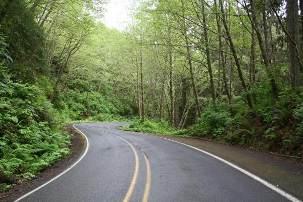 绿色森林公园风景精美图片