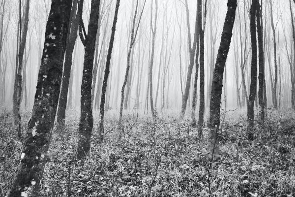 树林黑白摄影图片