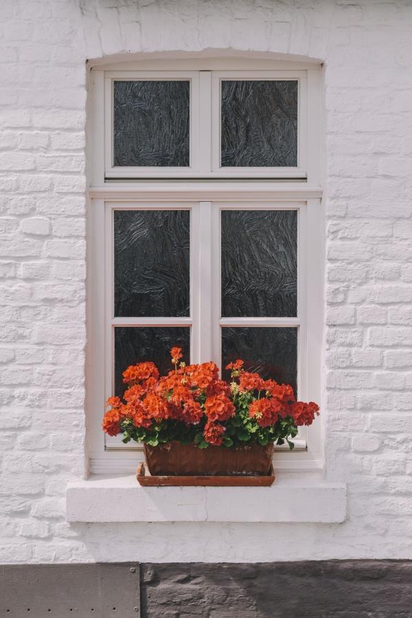窗户盆栽花卉图片大全