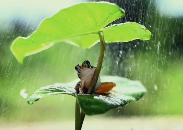 雨中躲雨的青蛙图片下载