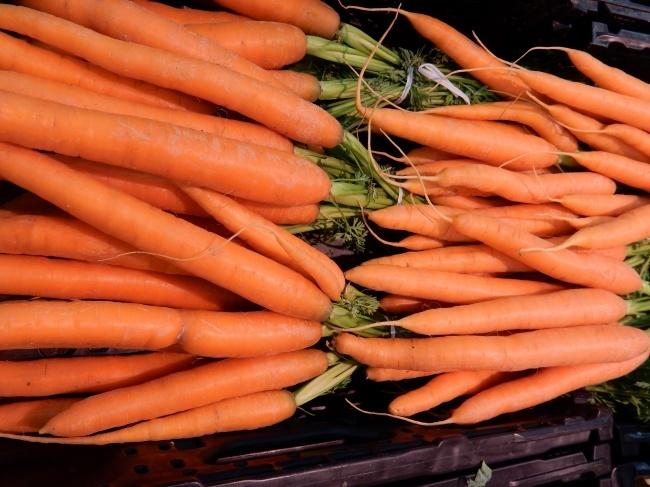红萝卜丰收高清图