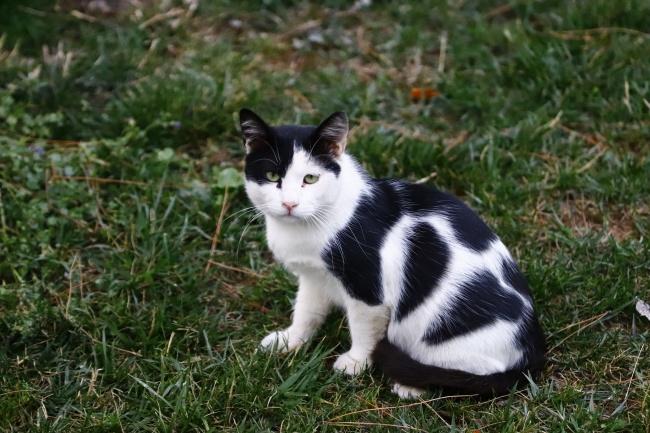 黑白小猫咪图片大全