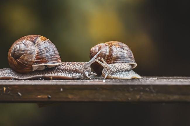 两只小蜗牛摄影图片下载
