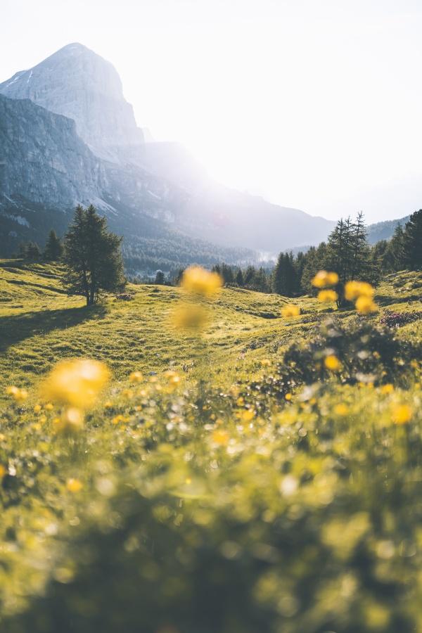 春天郊外绿色风景图片