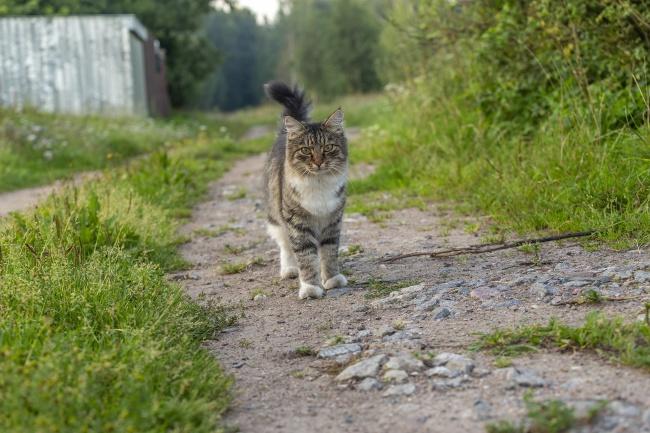 山路上宠物小猫高清图