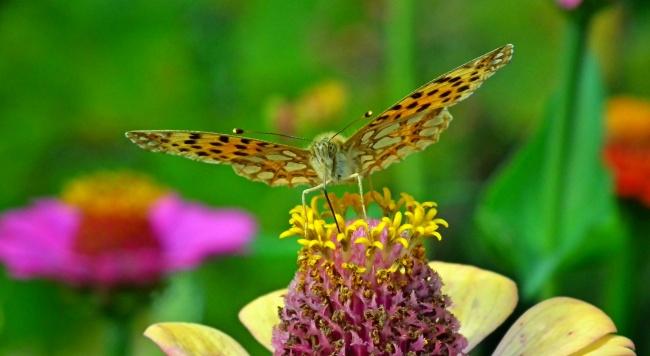 蝴蝶飞舞高清图片