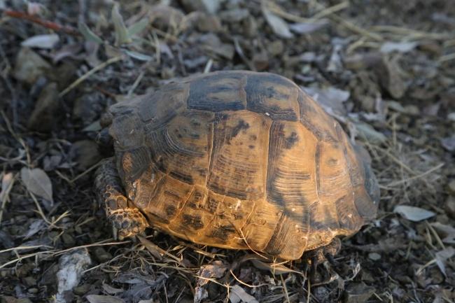 缩头老乌龟图片素材
