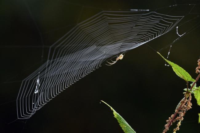 小蜘蛛知网图片