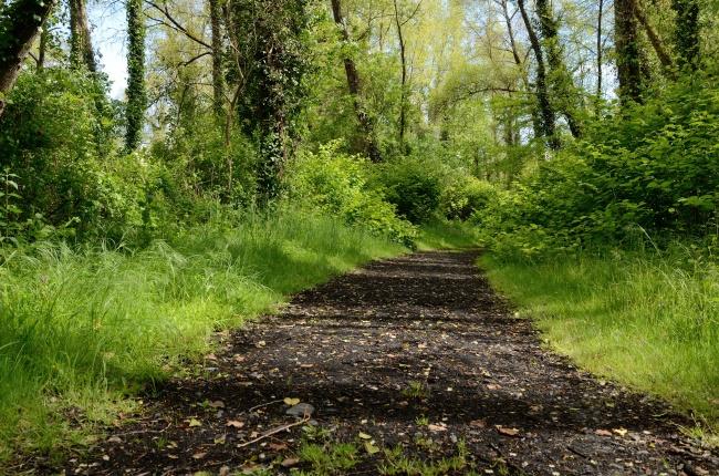 森林山路小路图片大全
