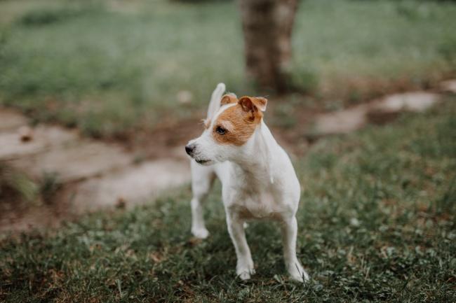 小型萌宠狗狗图片素材