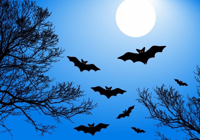 万圣节之夜蝙蝠图片