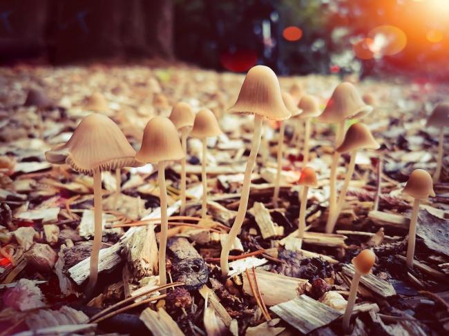 地面小蘑菇唯美高清图