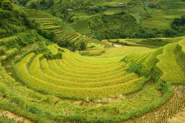 稻田水稻种植图片
