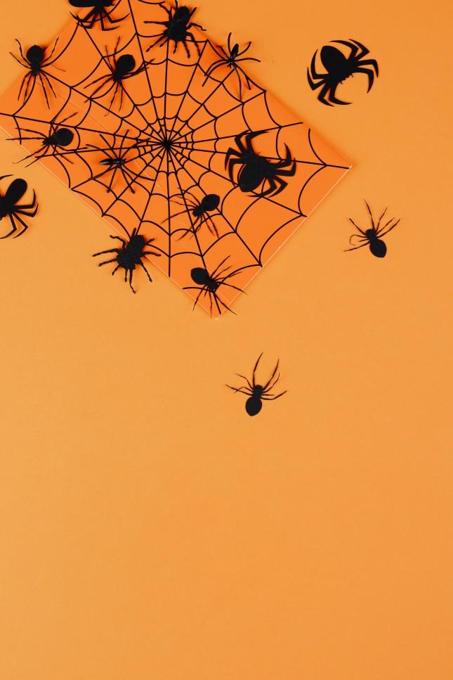 橙色背景上的黑色蜘蛛图片下载