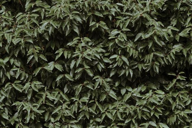 鲜绿色叶子背景图片素材